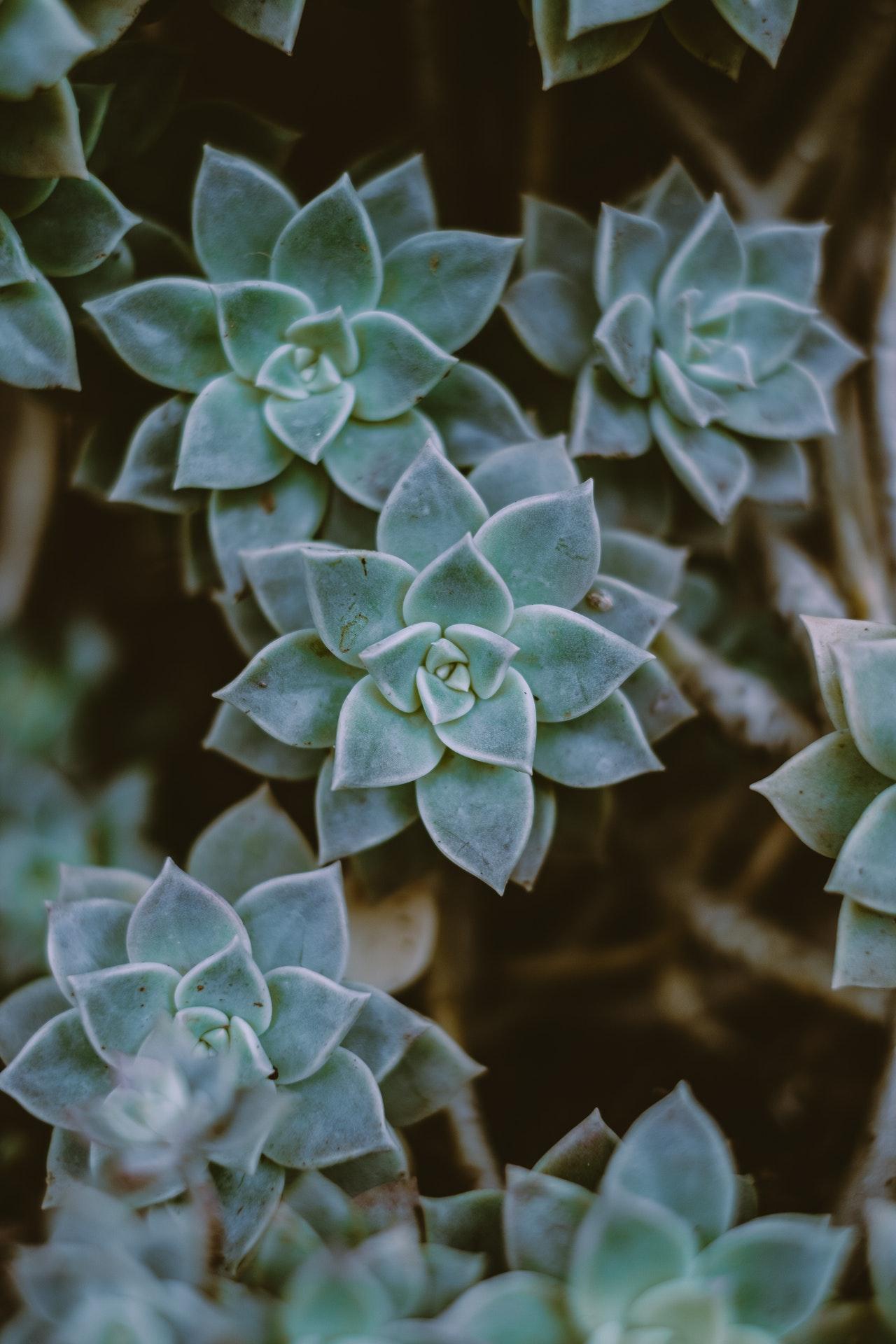 Homöopathie und Akupunktur: Freund oder Feind?